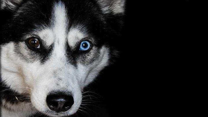 الكلاب الشريرة تنفق قبل أوانها