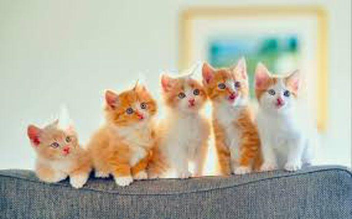 القطط تجعل أصحابها اكثر جرأة وشجاعة