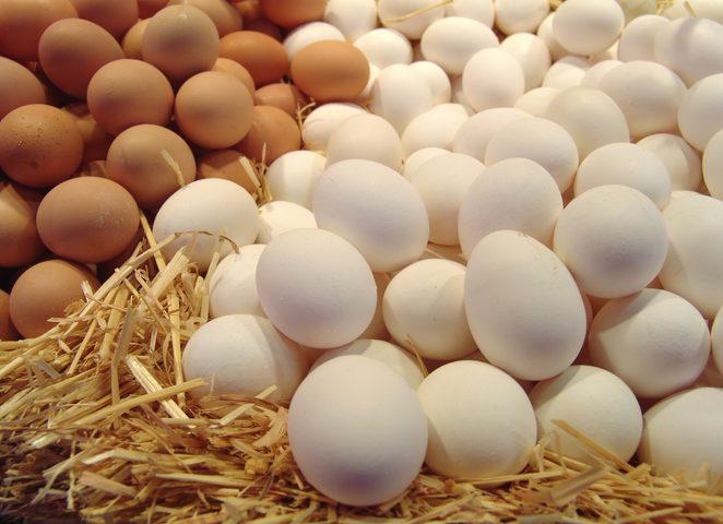 الصحة الاسرائيلية: 30% من البيض مصاب بالسالمونيلا