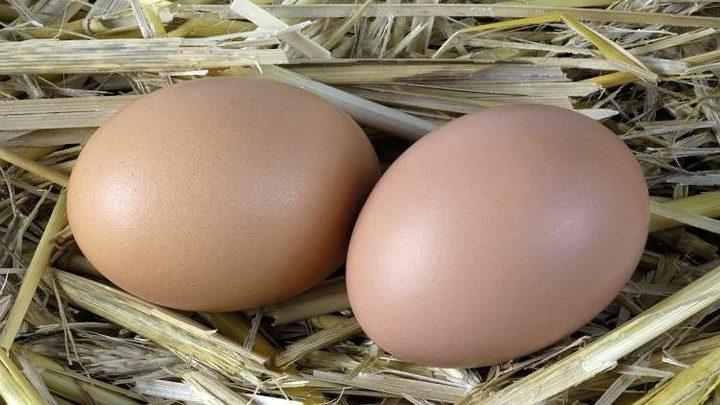 هذا ما سيحدث لجسمك إذا تناولت البيض يوميا!