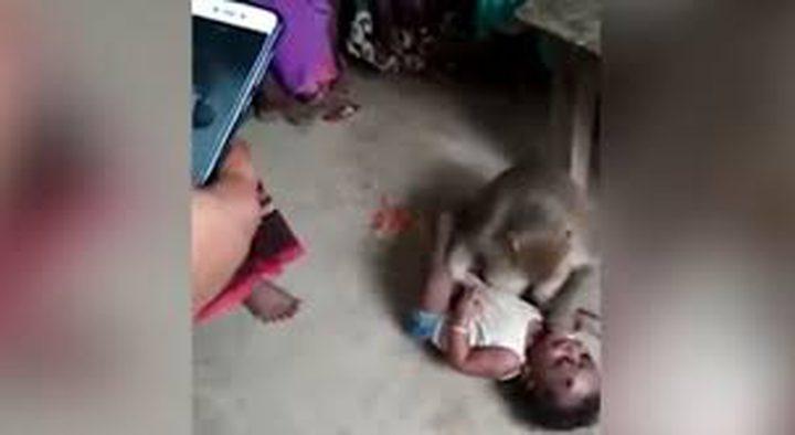 قرد يخطف طفلا من والديه ويهدد من يقترب منه! (فيديو