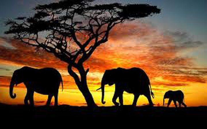 ما هو سبب عدم إصابة الفيلة بالسرطان على الإطلاق ؟