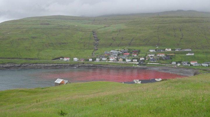 مجزرة تصبغ البحر باللون الأحمر!