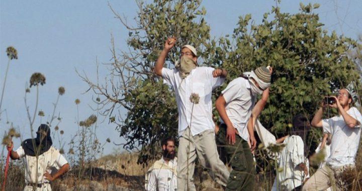 إصابات جنوب نابلس بحجارة المستوطنين
