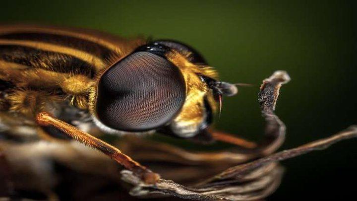 هل يميز النحل البشر من وجوههم؟