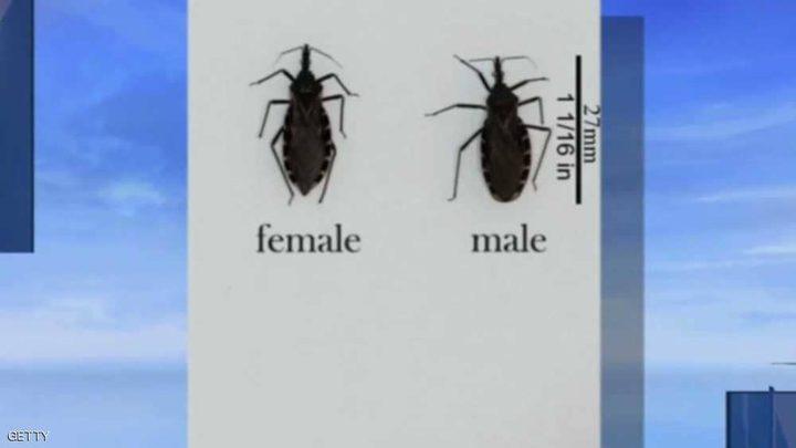 حشرة لدغتها تصيب البشر بأمراض القلب