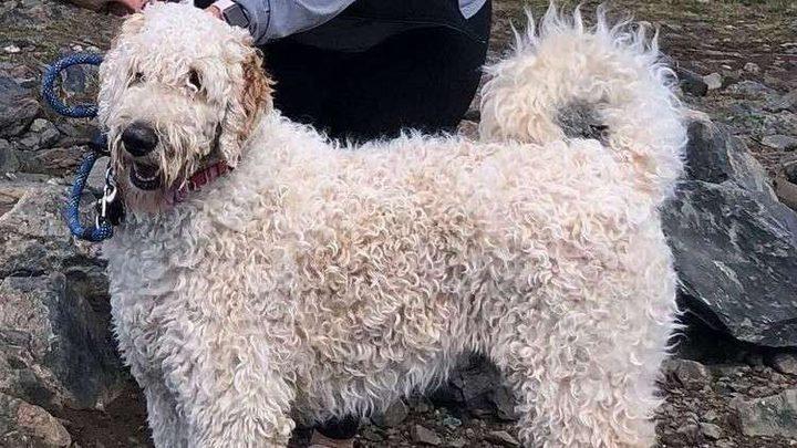 وفاء بلا حدود.. كلب ينتظر صاحبته 19 يوما! (فيديو)