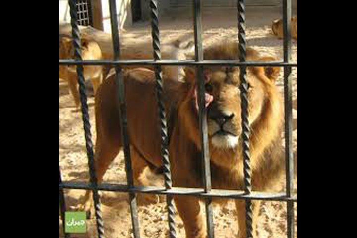 لأول مرة.. أقفاص للبشر في حديقة الحيوانات