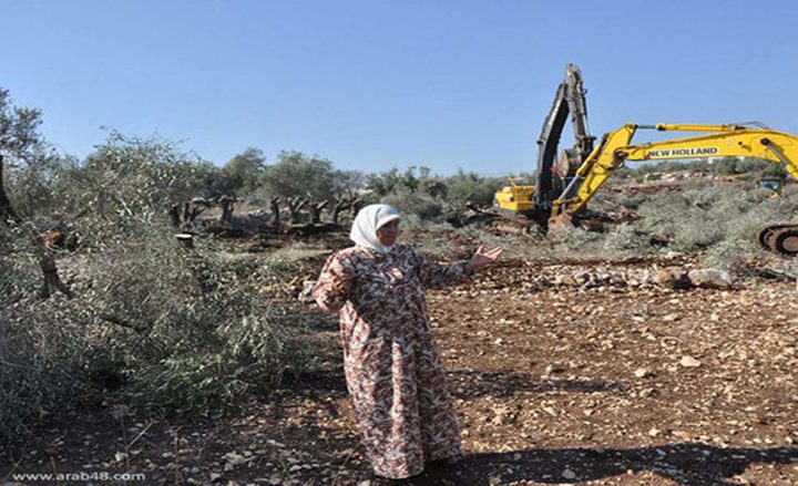 الاحتلال يُخطر باقتلاع 70 شجرة زيتون