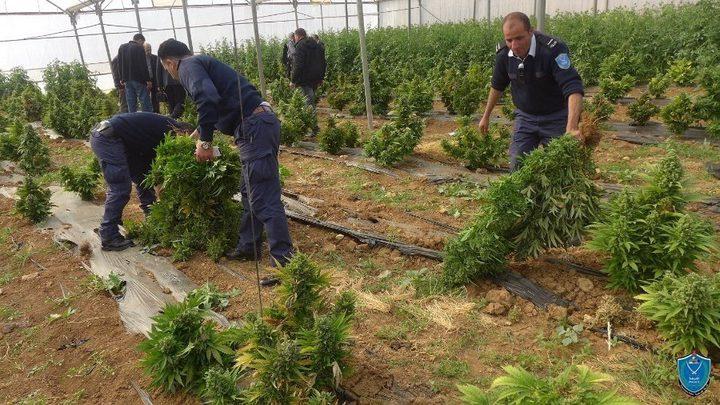 ضبطمشتل ضخم للمخدرات في قرية زعيّم