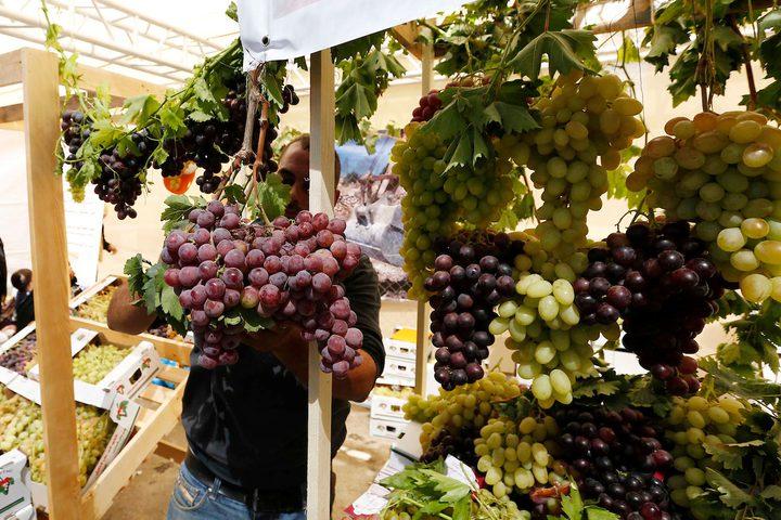 الفلسطينيون يعرضون العنب خلال مهرجان العنب الفلسطيني في قرية حلحول ، بالقرب من مدينة الخليل في الضفة الغربية