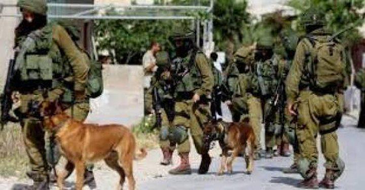 الاحتلال يفتش منزل مقدسي بالكلاب البوليسية