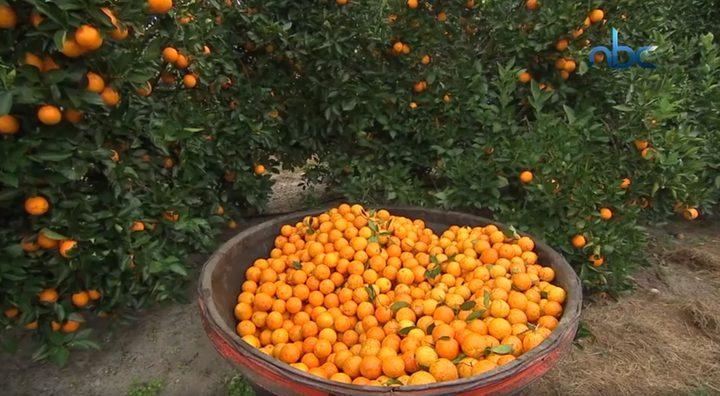 البرتقال مفيد للوقاية من تدهور شبكية العين