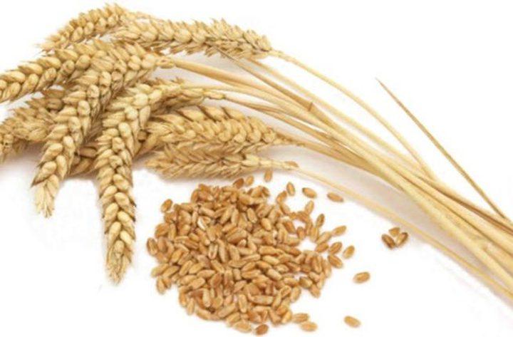 ماذا تعرف عن حساسية القمح؟