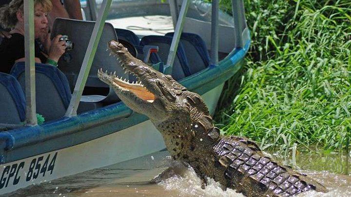 بعد أن أصبحت عمدة..مسنة تأخذ بثأرها من تمساح شرس!