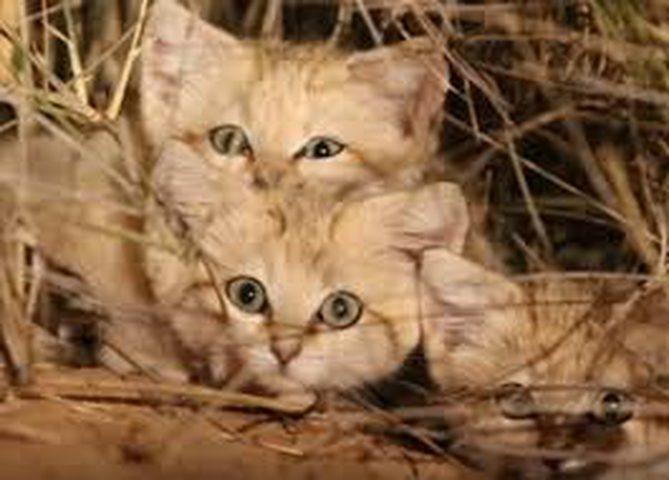 """سيدة تركية تصيد القطط وتحولها """"شاورما"""" للسوريين!"""