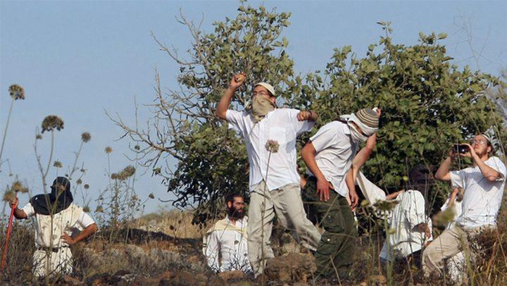 مستوطنون يجرفون قطعة أرض بحي الشيخ جراح