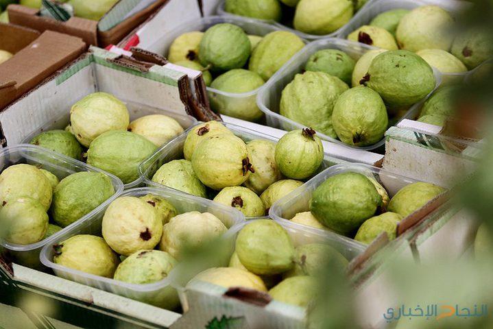 """فاكهة """"مدينة الجدارين"""" المدللة في بيوت الأردنيين"""