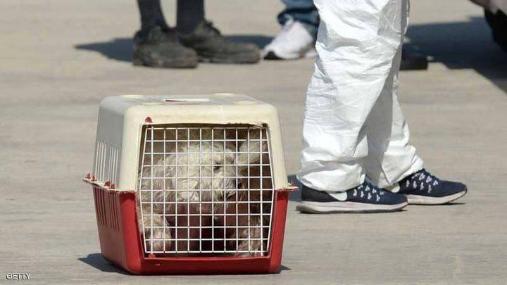 إنقاذ كلبة مهاجرة علقت في عرض البحر