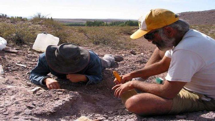 ظهور نوع جديد من الديناصورات العملاقة في الأرجنتين