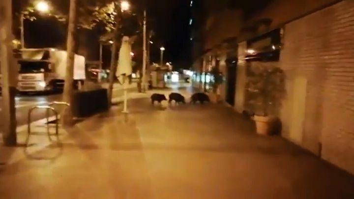 حيوانات الغابة يثيرون قلق الناس في برشلونة!