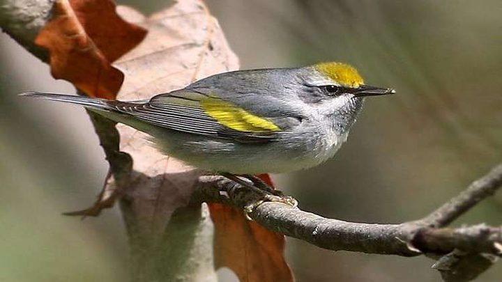 اكتشاف سر الطائر النادر الذي حير العلماء