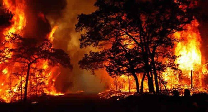 طوارئ في كاليفورنيا بارتفاع ضحايا الحرائق لـ 50