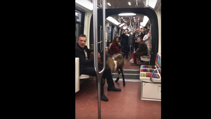 فرنسي يصطحب تيسا إلى القطار ويثير أزمة في المترو