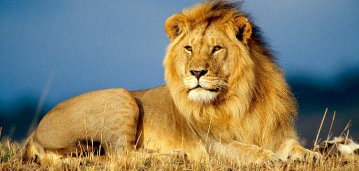 أشهر حيوانات العالم مهددة بالانقراض