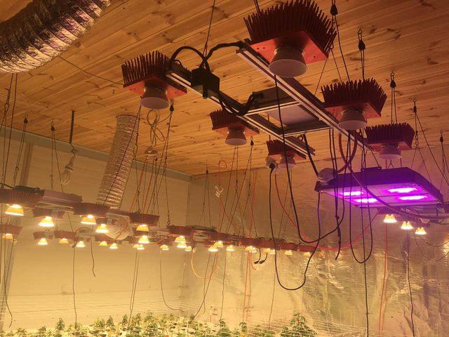 الزراعة المائيه تقنيّة جديدة تدخل زراعة المخدرات