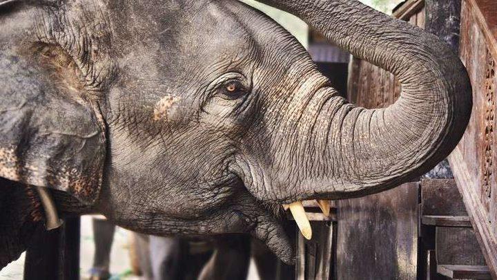 """فيل """"يقتل"""" رجلا على طريق عام!"""