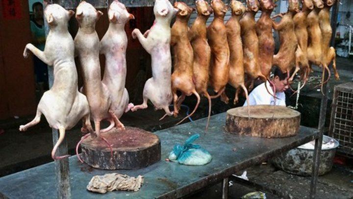 سفارة كوريا الجنوبية بمصر تنفي أكلهم لحوم الكلاب