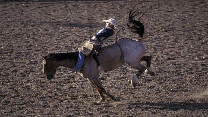 رفسة حصان تنقذ فارسا من الموت!