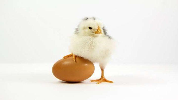 """طرح """"البيض المنقذ"""" للبيع لأول مرة في العالم!"""
