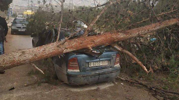 اصابة 4 مواطنين بعد سقوط شجرة ضخمة على سيارتهم