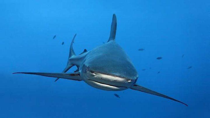 دلافين تنقذ مجموعة غواصين من قرش مفترس!