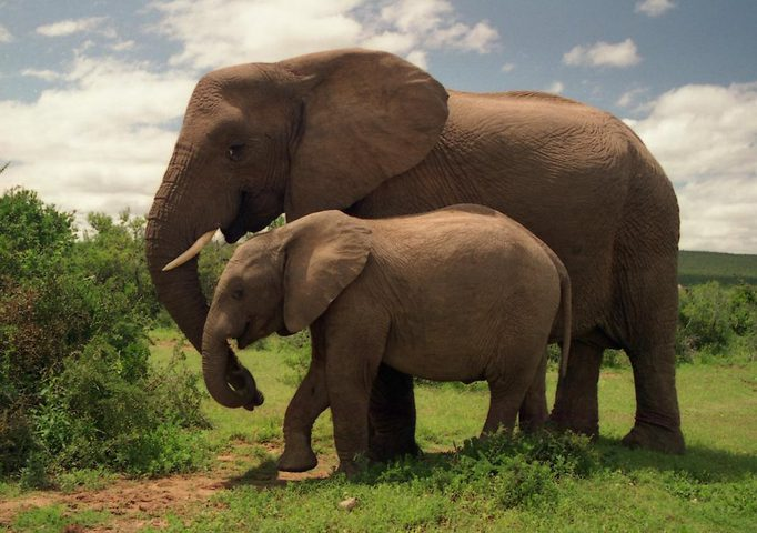 كيف تداوي الحيوانات نفسها بنفسها؟