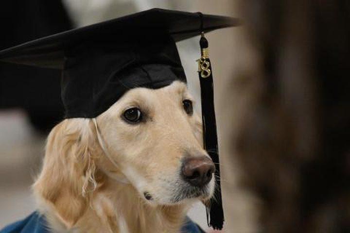 جامعة أمريكية تمنح كلب شهادة دبلوم
