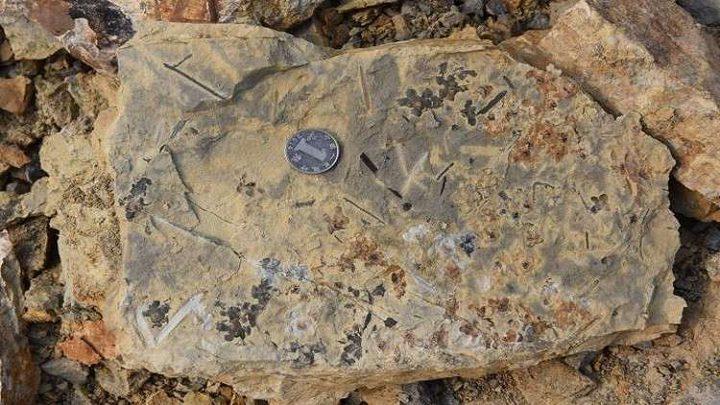 اكتشاف أحافير لأقدم الزهور على وجه الأرض