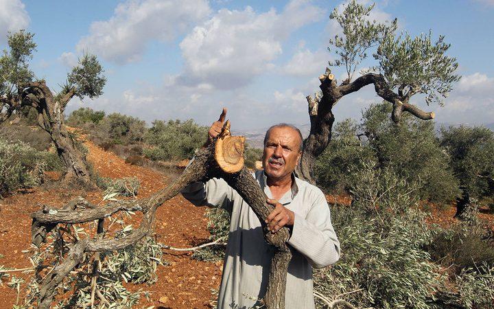 مستوطنون يقتلعون عشرات الأشتال شرق الخليل