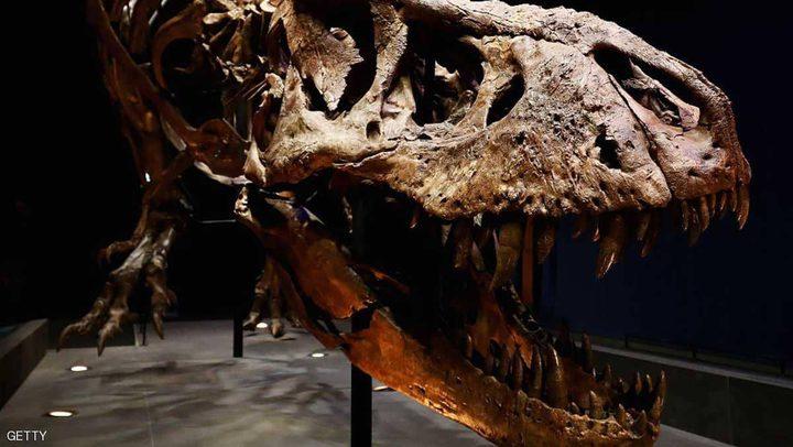 دراسة تكشف: تسونامي عظيم وراء انقراض الديناصورات
