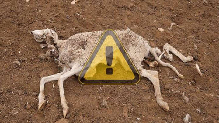 تفشي طاعون ينذر بكارثة في الجزائر