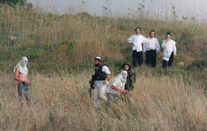 مستوطنون يهاجمون أراضي المواطنين في ترقوميا