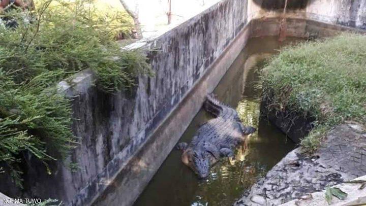عالمة أحياء تفقد حياتها بين فكي تمساح