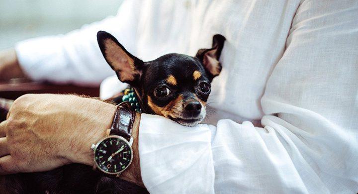 العلماء ينصحون مرضى السكري بتربية الكلاب