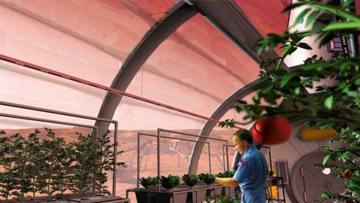 الصين تجري أولى تجارب الزراعة على سطح القمر