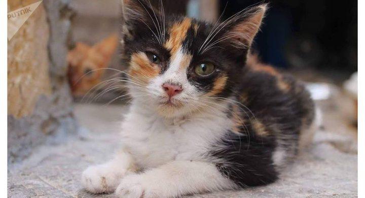 قطط تتسبب في إصابة فتاتين بالعمى