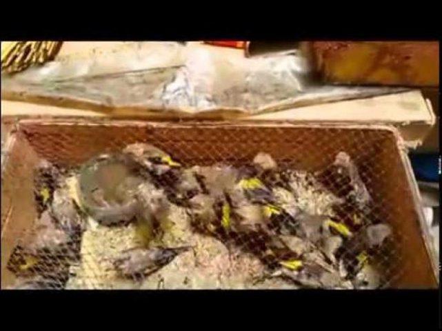 شرطة البيئة: تقبض على صائدي طيور برية في قلقيلية