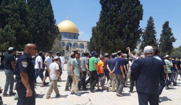 85 مستوطنا و103 ضباط في قوات الاحتلال يقتحمون الأقصى