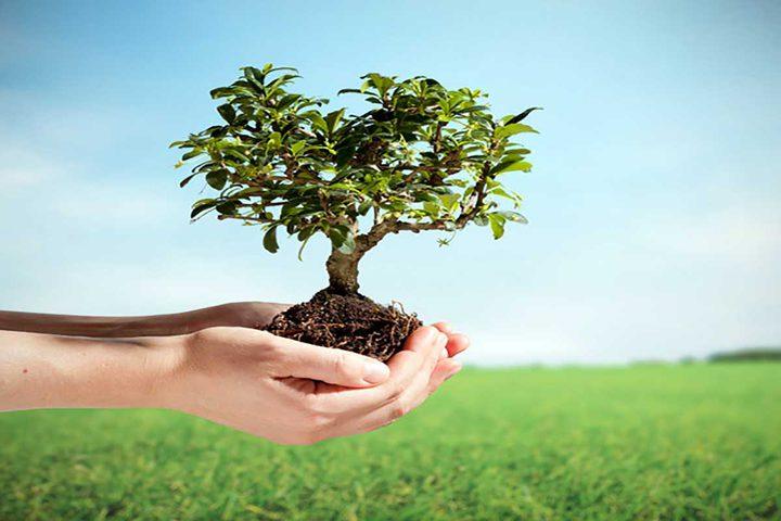 """""""شجرة في كل حفرة"""" مبادرة شبابية لتزيين شوارع الضفة بالأشجار"""